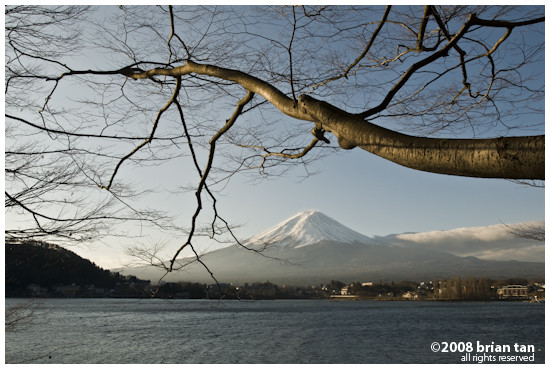Mount Fuji framed by a tree