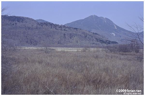 ... more marshland...