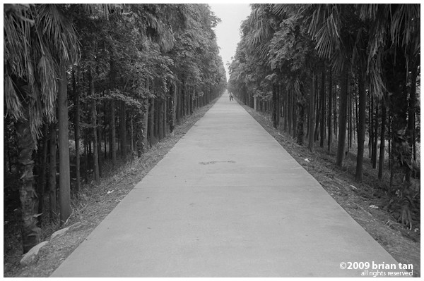 Tree lined street on Hengsha