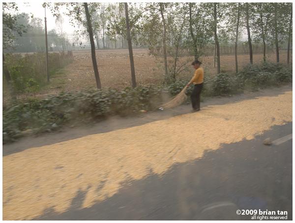 Outside Zhoukou I got my first glimpse of corn land