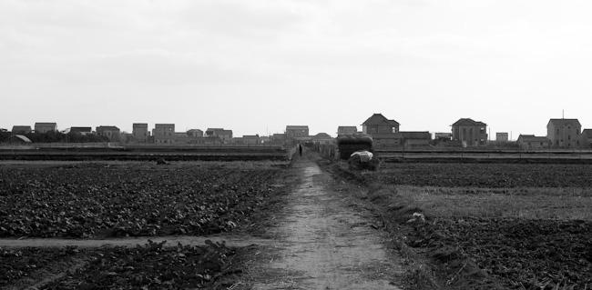 Farm houses on Hengsha