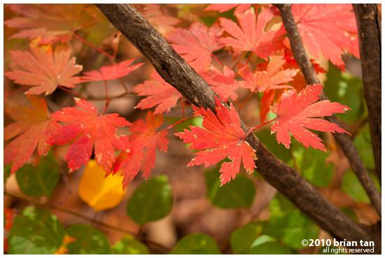 DSC1235-2010-10-23-21-48.jpg