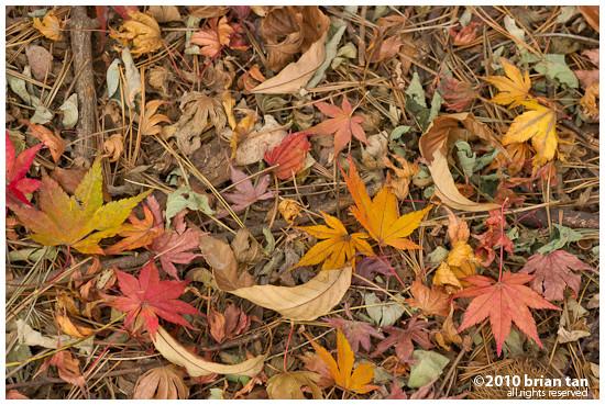 DSC7412-2010-11-14-17-48.jpg