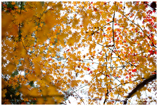 DSC7424-2010-11-14-17-48.jpg