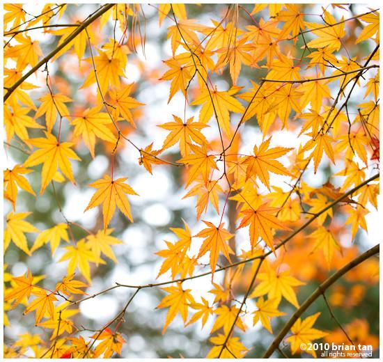 DSC7428-2010-11-14-17-48.jpg