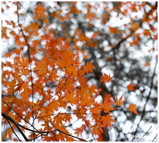 DSC7438-2010-11-14-17-48.jpg