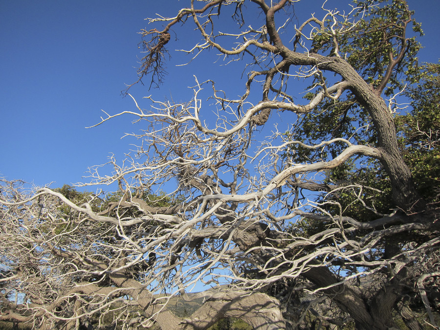 Trees in this part of the world grow in strange shapes, primarily caused by exposure to strong winds.