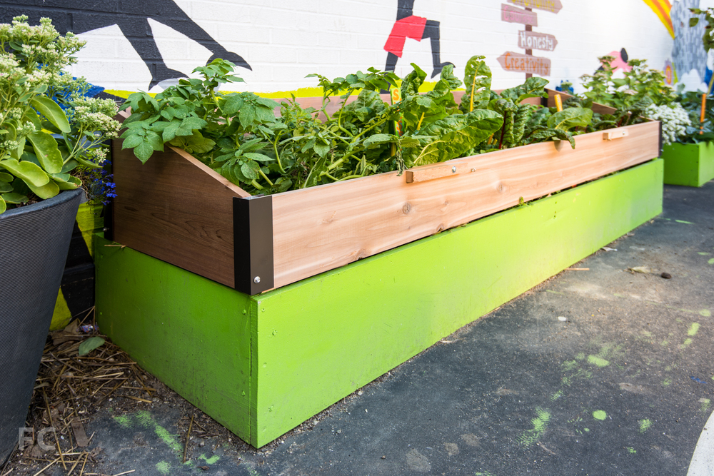 Box planter in the teaching garden.