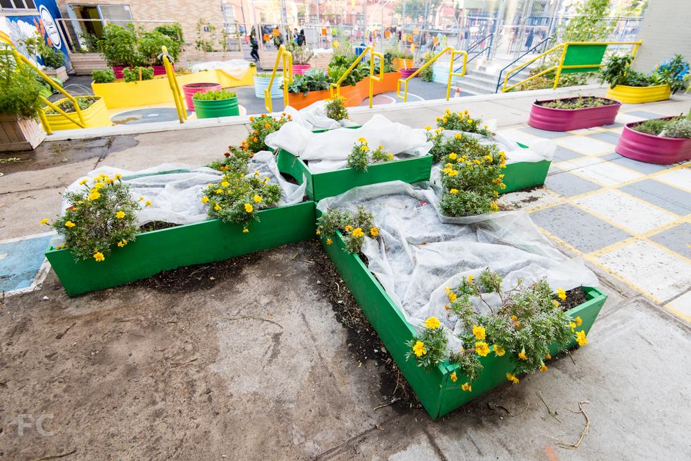 Plus planter in the teaching garden.