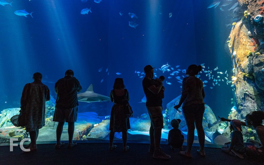 2018_07_05-NY Aquarium-DSC03503.jpg