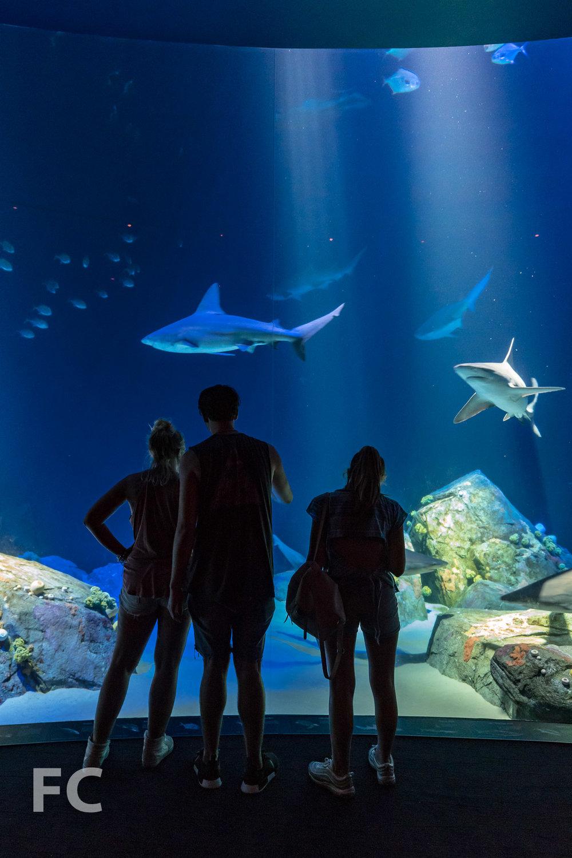 2018_07_05-NY Aquarium-DSC03525.jpg