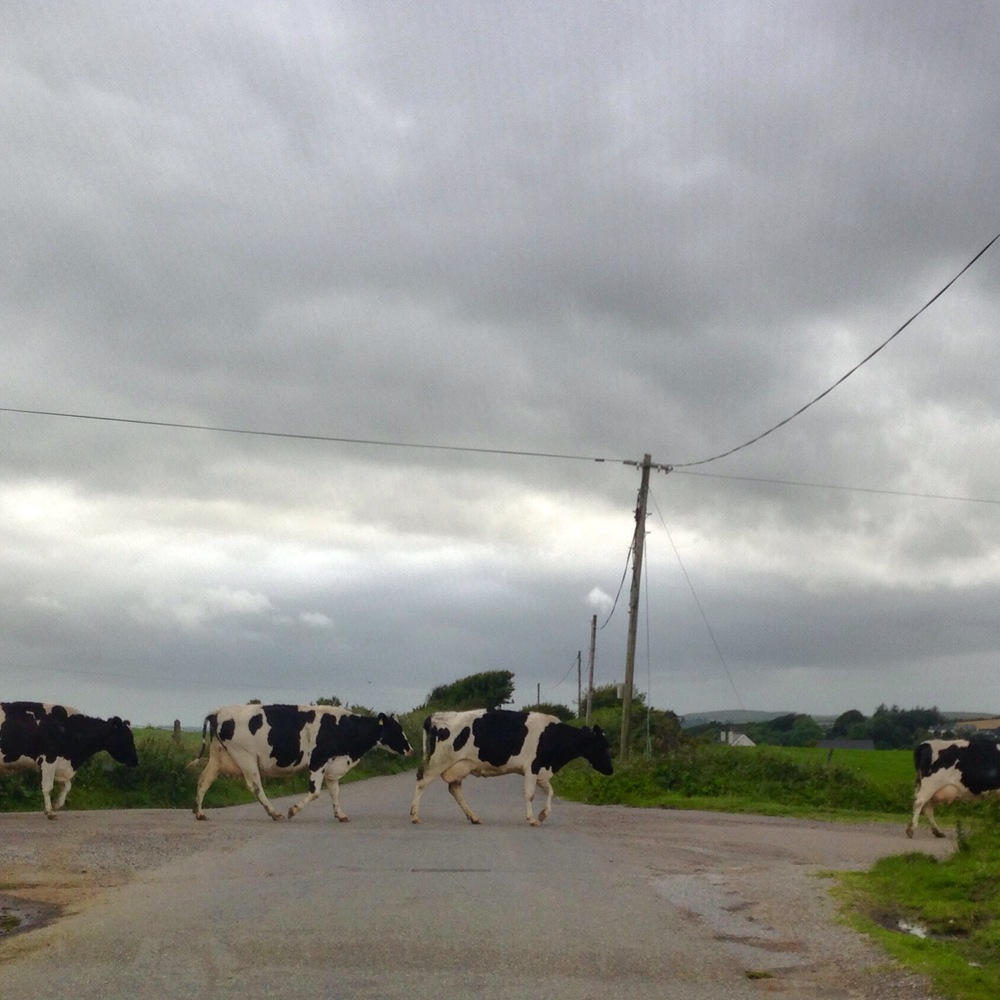 rush hour in rural ireland.