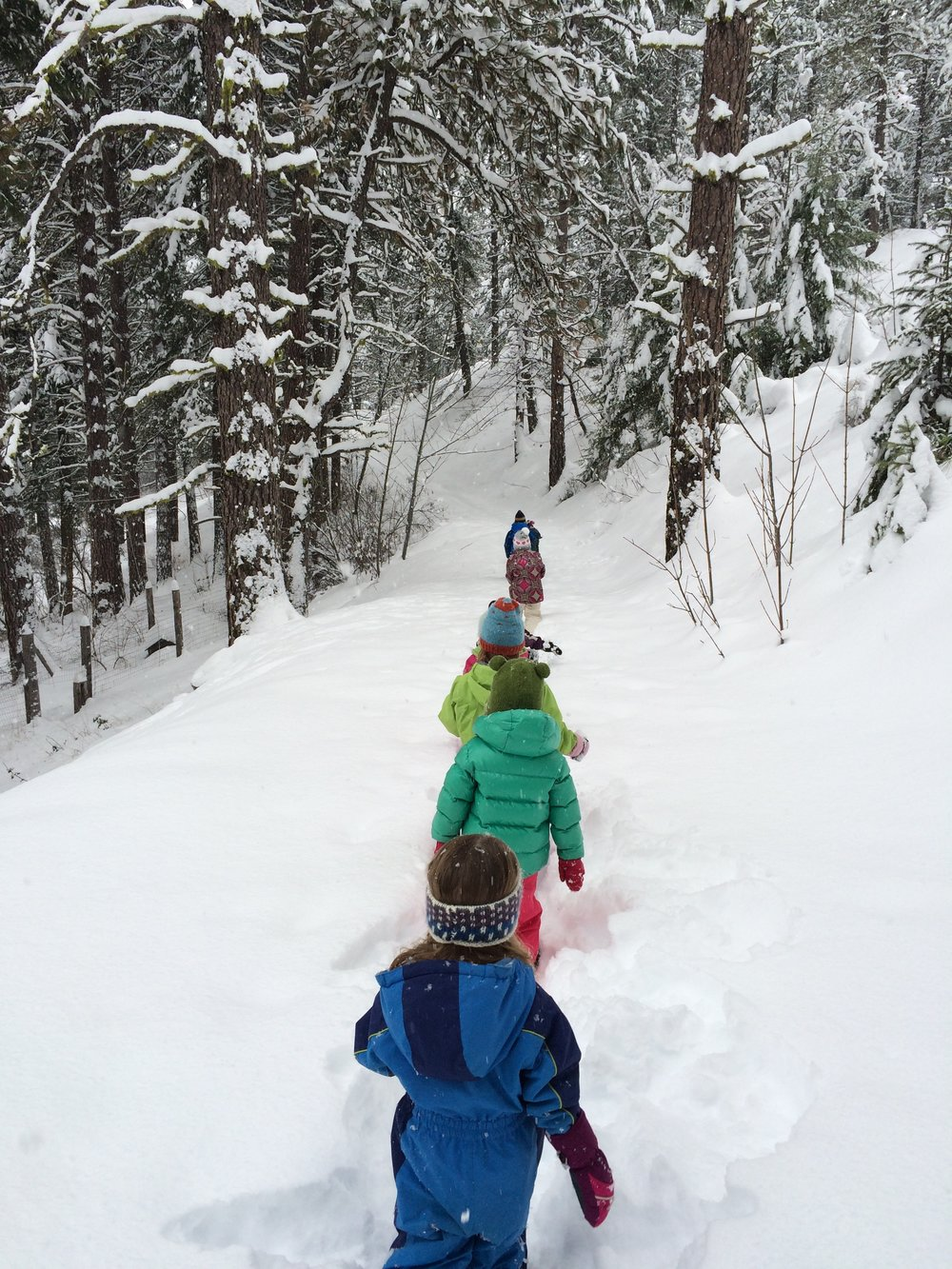 Family Explorers - free - Come learn what nature immersion education is all about by joining our class for free!Sign up online for any day you would like to come to Willow with an adult joining a child in class. Please come 20 minutes early for class.No drop ins, registration required - you may be turned away without registration.