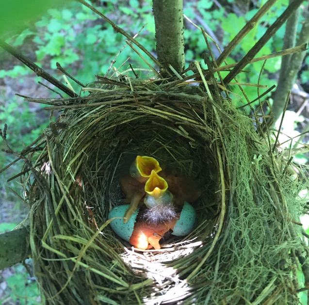 Willow spring.jpg