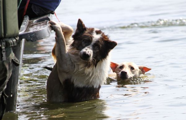 dog-stranded-in-flood.jpg