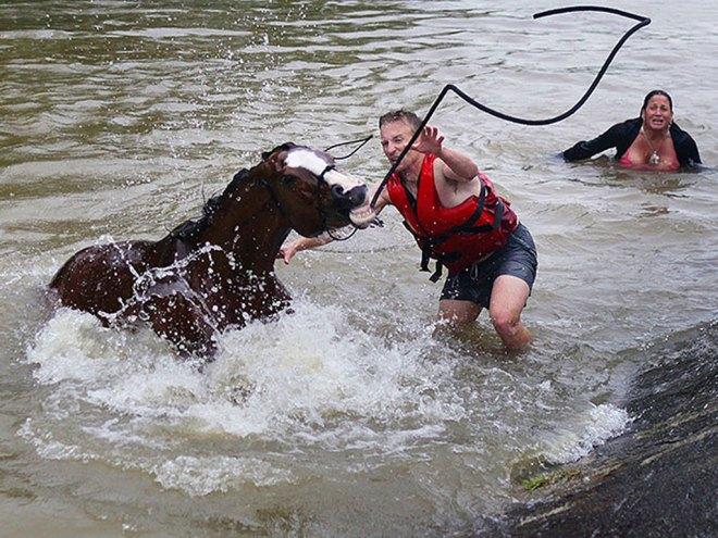 horse_rescue1.jpg