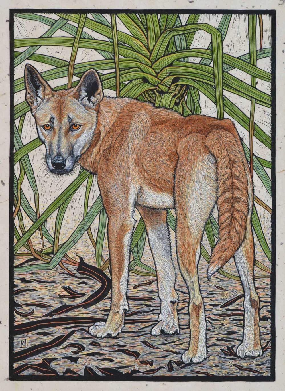 dingo-northern-territory-linocut-rachel-newling.jpg