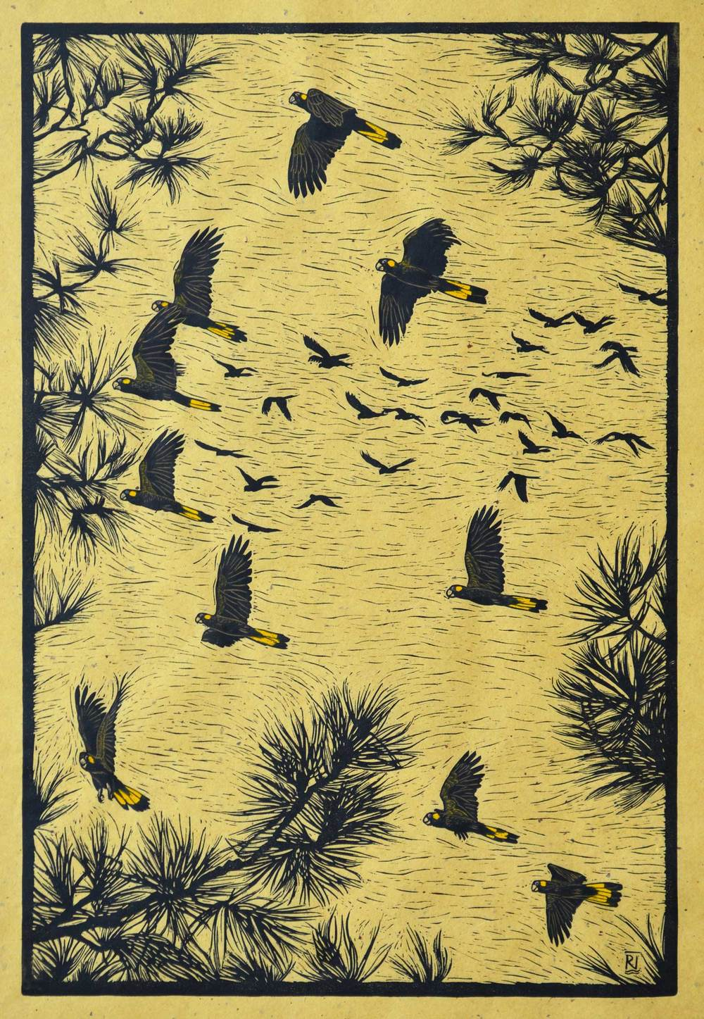 Yellow-tailed black cockatoos in flight  63 x 42 cm    Edition of 50  Hand coloured linocut on handmade Japanese paper  $1,100