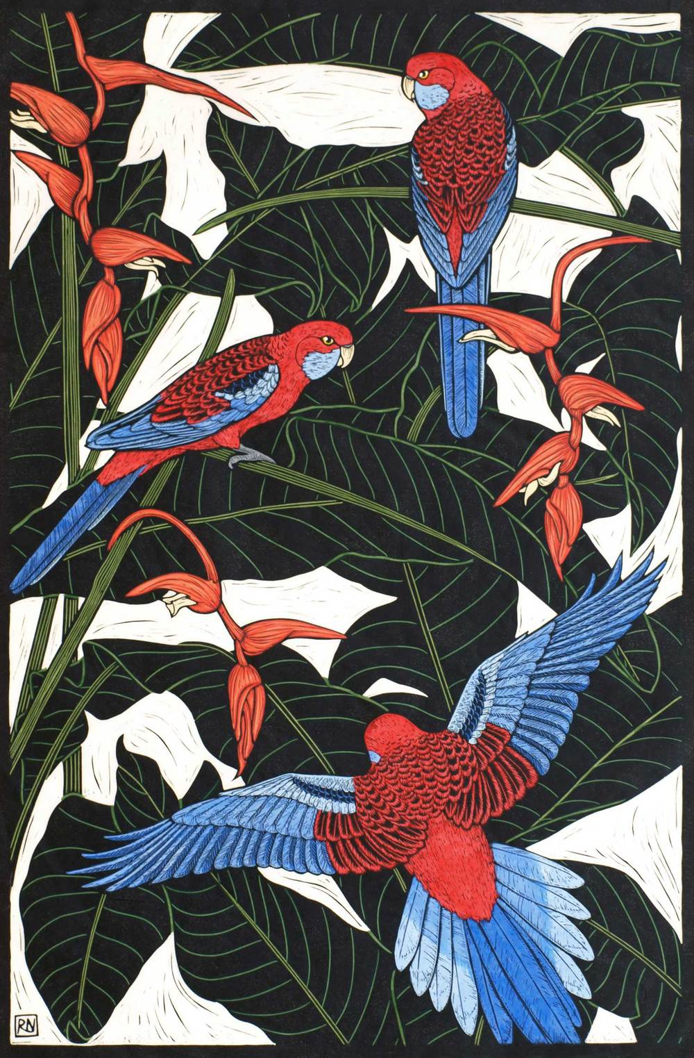 CRIMSON ROSELLA  74.5 X 49 CM    EDITION OF 50  HAND COLOURED LINOCUT ON HANDMADE JAPANESE PAPER  $1,550