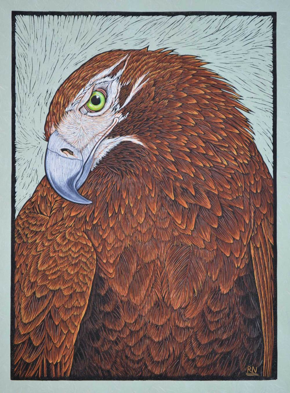 WEDGE TAILED EAGLE  51.5 X 37 CM    EDITION OF 50  HAND COLOURED LINOCUT ON HANDMADE JAPANESE PAPER  $1,100