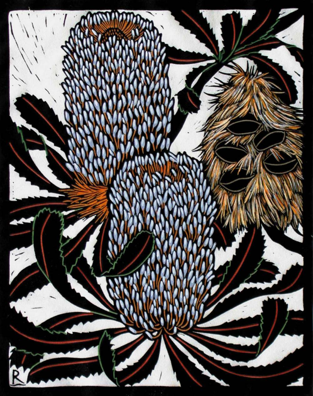 BANKSIA SERRATA 28 X 22 CM    EDITION OF 50 HAND COLOURED LINOCUT ON HANDMADE JAPANESE PAPER $550