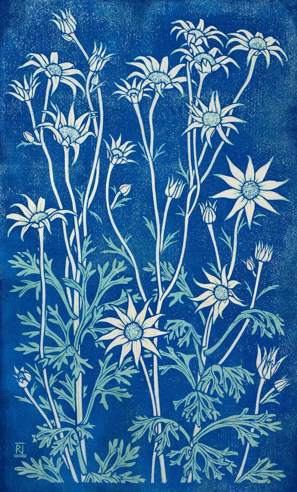 Flannel Flower II 49 x 30 cm    Edition of 16 Reduction linocut on handmade Japanese paper $950