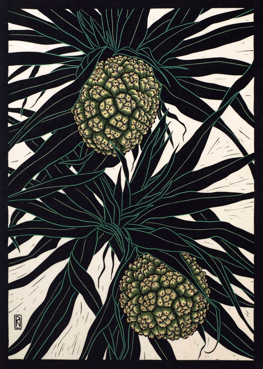 PANDANUS FRUIT  49 X 35 CM EDITION OF 50  HAND COLOURED LINOCUT ON HANDMADE JAPANESE PAPER  $1,050