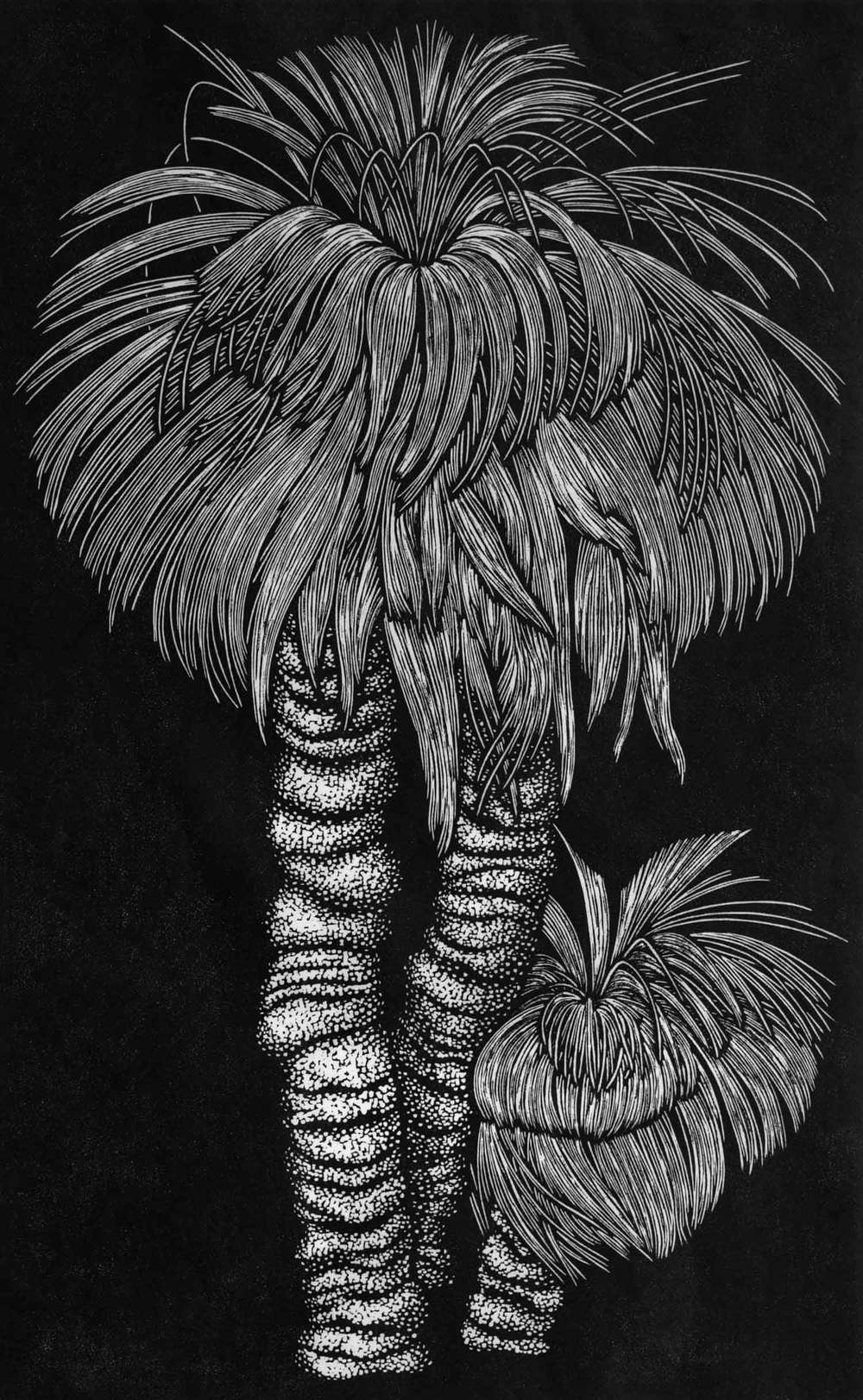 THREE GRASS TREES  69 X 43 CM    EDITION OF 50  LINOCUT ON HANDMADE JAPANESE PAPER  $1,250
