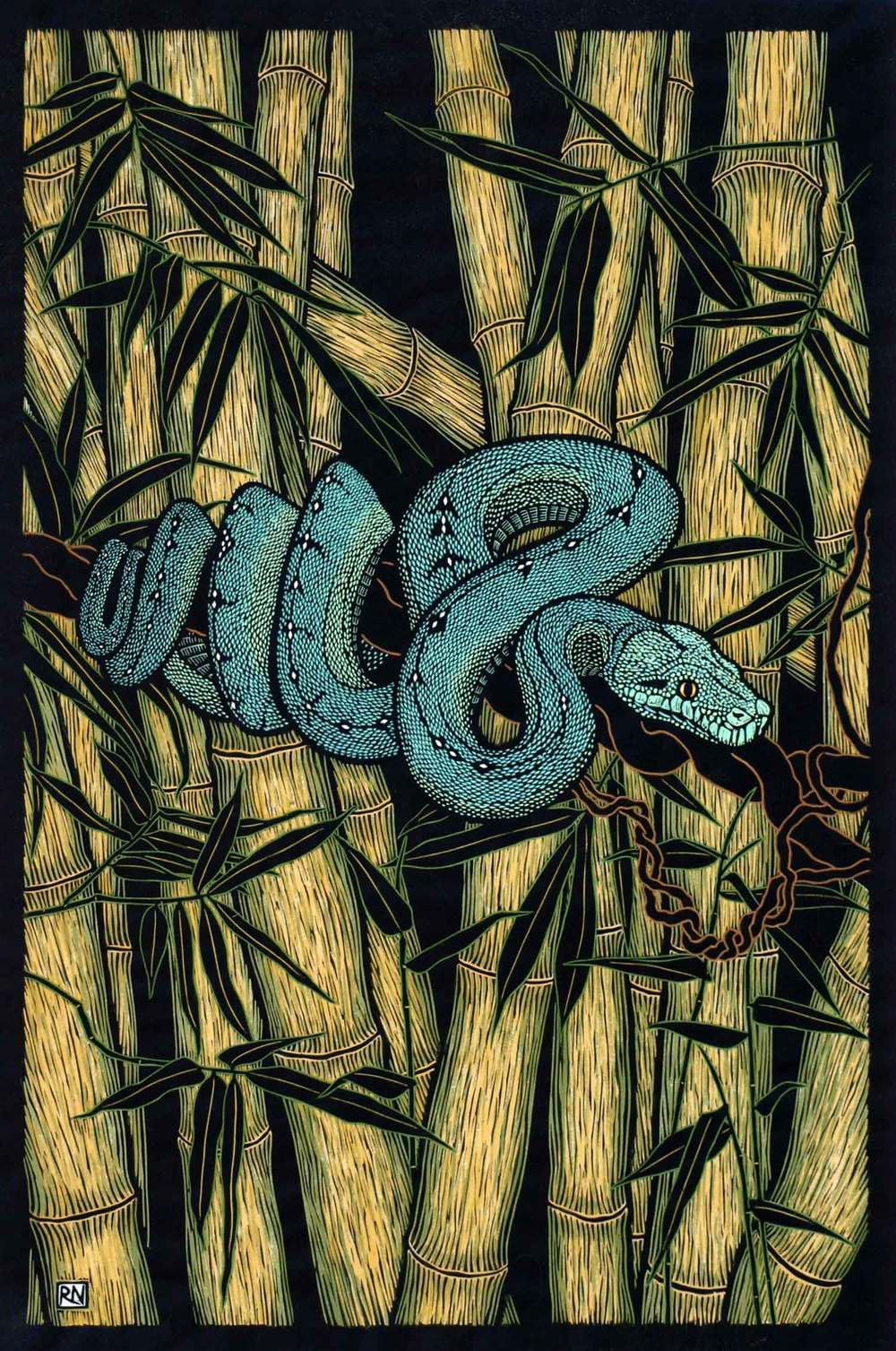 GREEN TREE PYTHON  76 X 50.5 CM EDITION OF 50  HAND COLOURED LINOCUT ON HANDMADE JAPANESE PAPER  $1,550