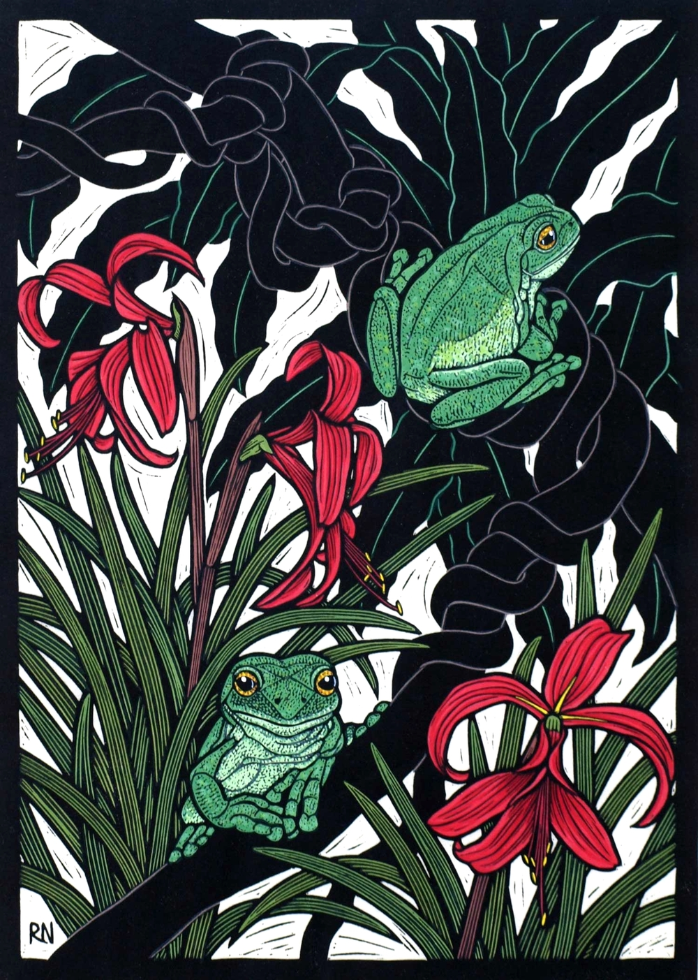 GREEN TREE FROG  49 X 35 CM    EDITION OF 50  HAND COLOURED LINOCUT ON HANDMADE JAPANESE PAPER  $1,050