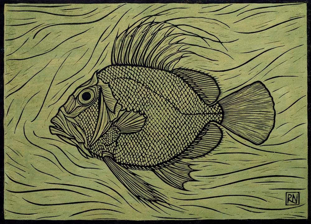 JOHN DORY  30 X 41.5 CM EDITION OF 50  HAND COLOURED LINOCUT ON HANDMADE JAPANESE PAPER  $750