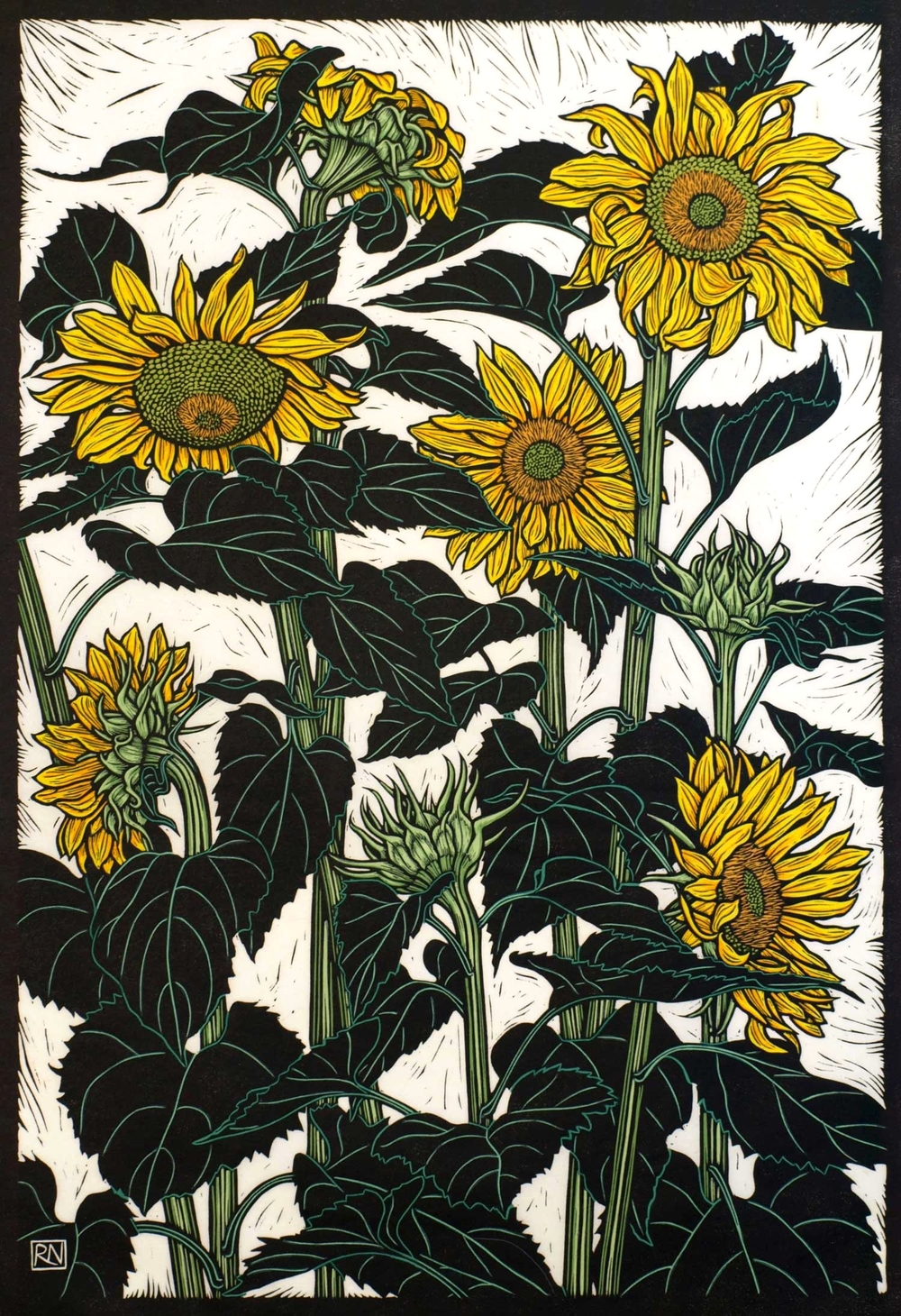 SUNFLOWERS NEWPORT  74.5 X 51 CM    EDITION OF 50  HAND COLOURED LINOCUT ON HANDMADE JAPANESE PAPER  $1,700