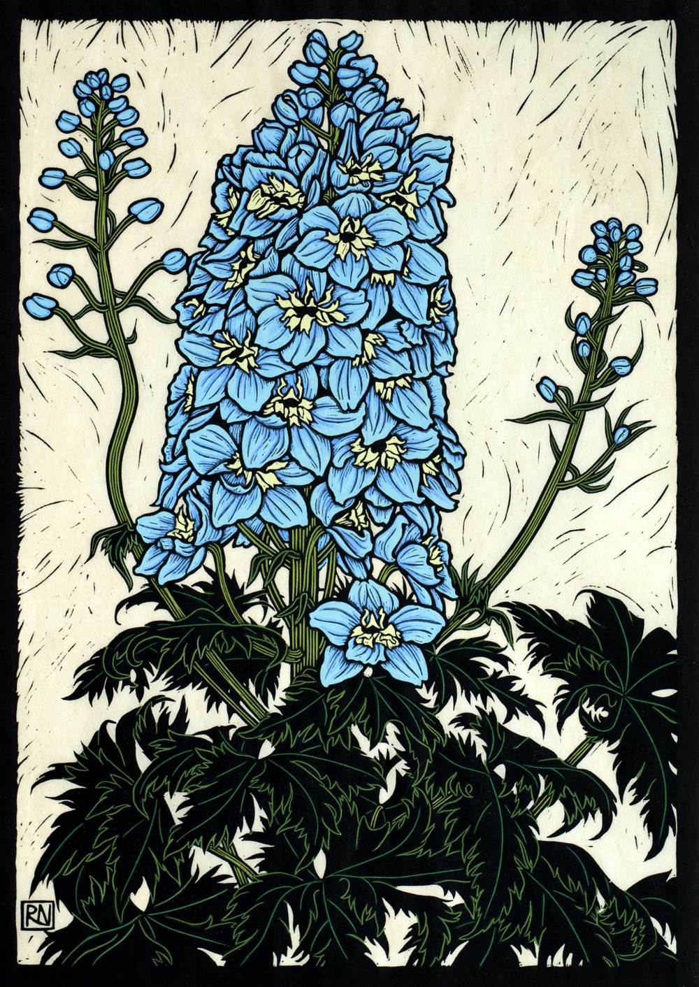 DELPHINIUM  49 X 35 CM    EDITION OF 50  HAND COLOURED LINOCUT ON HANDMADE JAPANESE PAPER  $1,050