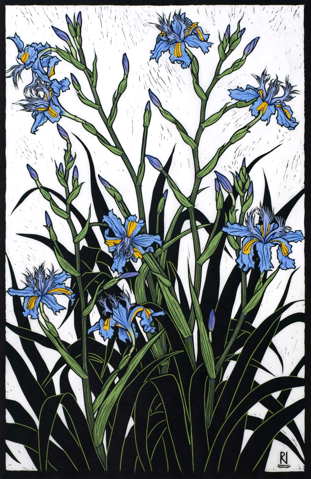 RUNNING IRIS  61 X 39 CM    EDITION OF 50  HAND COLOURED LINOCUT ON HANDMADE JAPANESE PAPER  $1,100