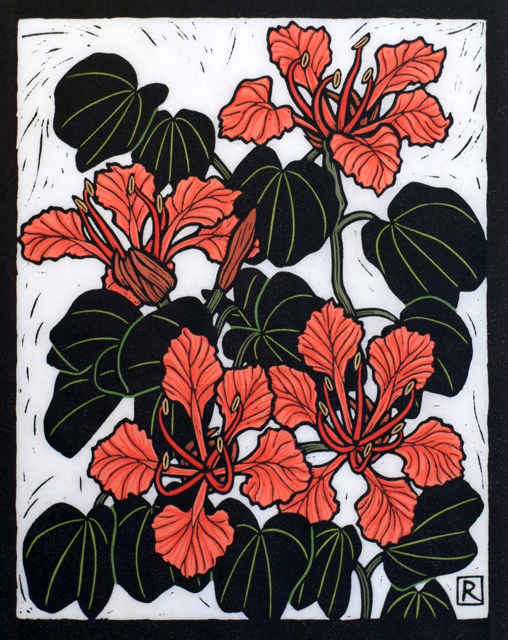 BAUHINIA                                                   28 X 22 CM    EDITION OF 50                    HAND COLOURED LINOCUT ON HANDMADE JAPANESE PAPER                $650