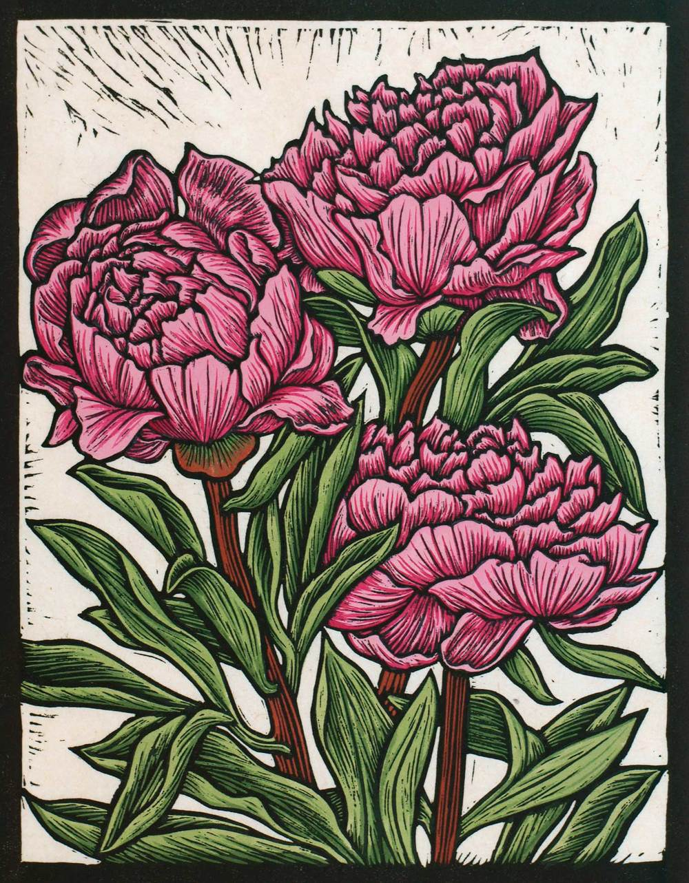 PEONY ROSE                                               29.5 X 23 CM    EDITION OF 50                         HAND COLOURED LINOCUT ON HANDMADE JAPANESE PAPER                $650