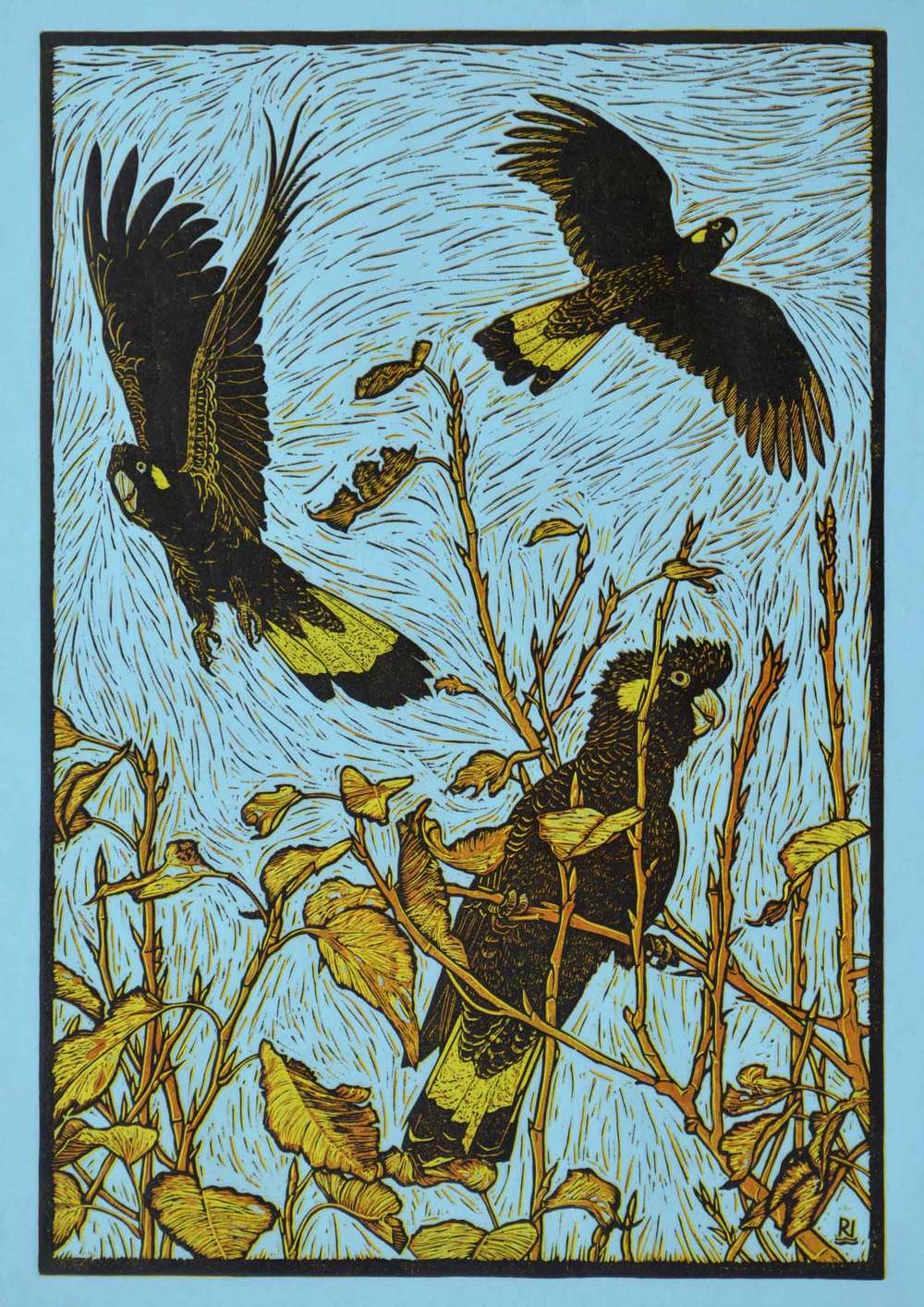 three-yellow-tailed-black-cockatoos-reduction-linocut-rachel-newling.jpg