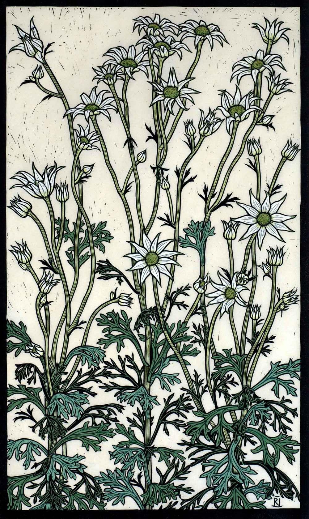 flannel-flower-linocut-rachel-newling.jpg