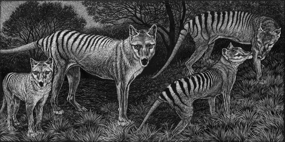 THYLACINES - THE LAST ONES  46 X 92 CM EDITION OF 50  PIGMENT ON COTTON RAG PAPER  $1,550