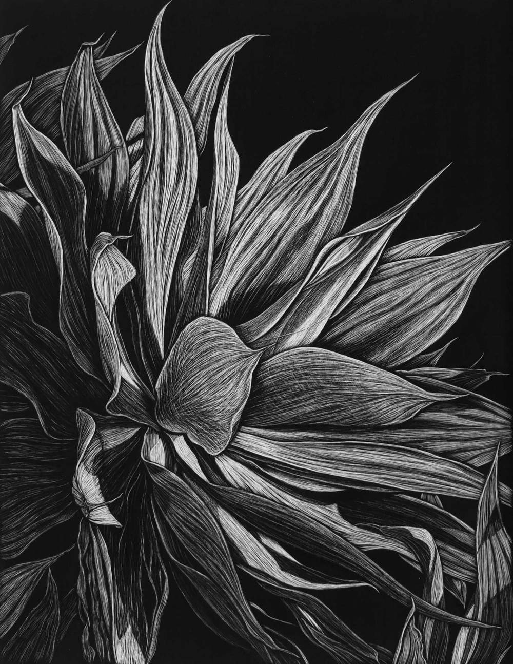 AGAVE, CLAREVILLE BEACH I  45.5 X 35.5 CM EDITION OF 50  PIGMENT ON COTTON RAG PAPER  $750