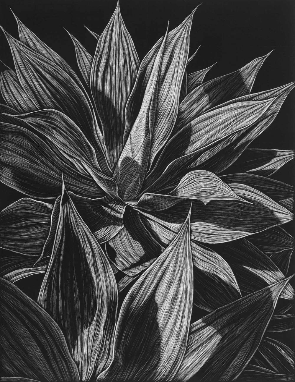 AGAVE, CLAREVILLE BEACH III 45.5 X 35.5 CM    EDITION OF 50 PIGMENT ON COTTON RAG PAPER $800
