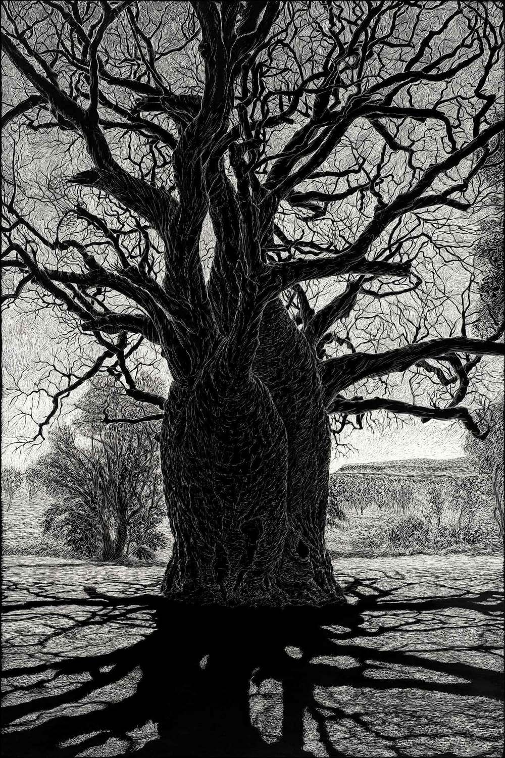 boab-tree-near-wyndham-engraving-rachel-newling.jpg