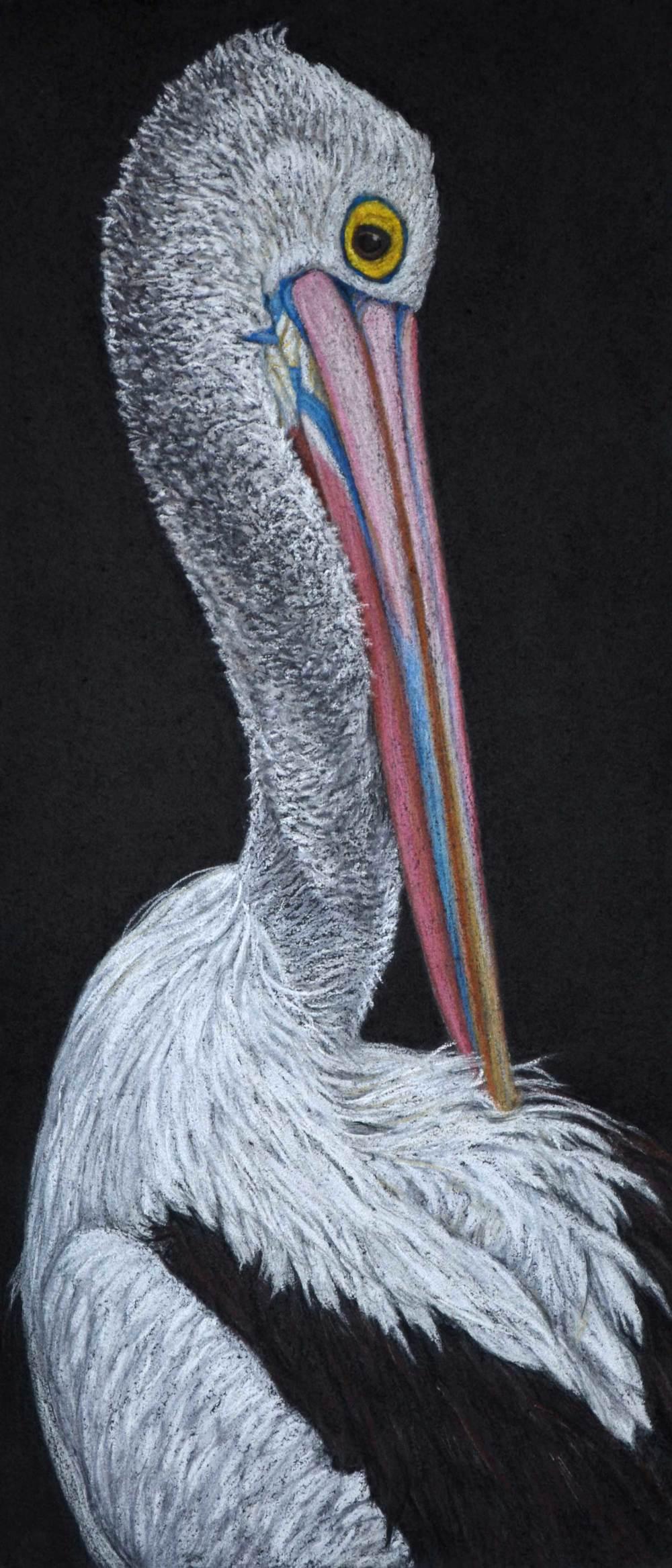 Pelican  49 x 21.5 cm                       Pastel on handmade paper                 $1,200