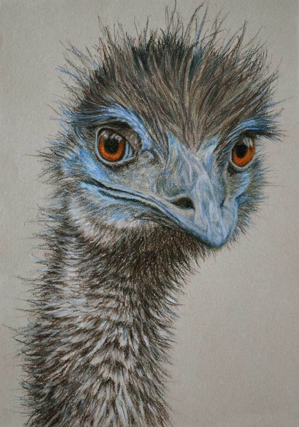 emu-2-drawing-rachel-newling.jpg