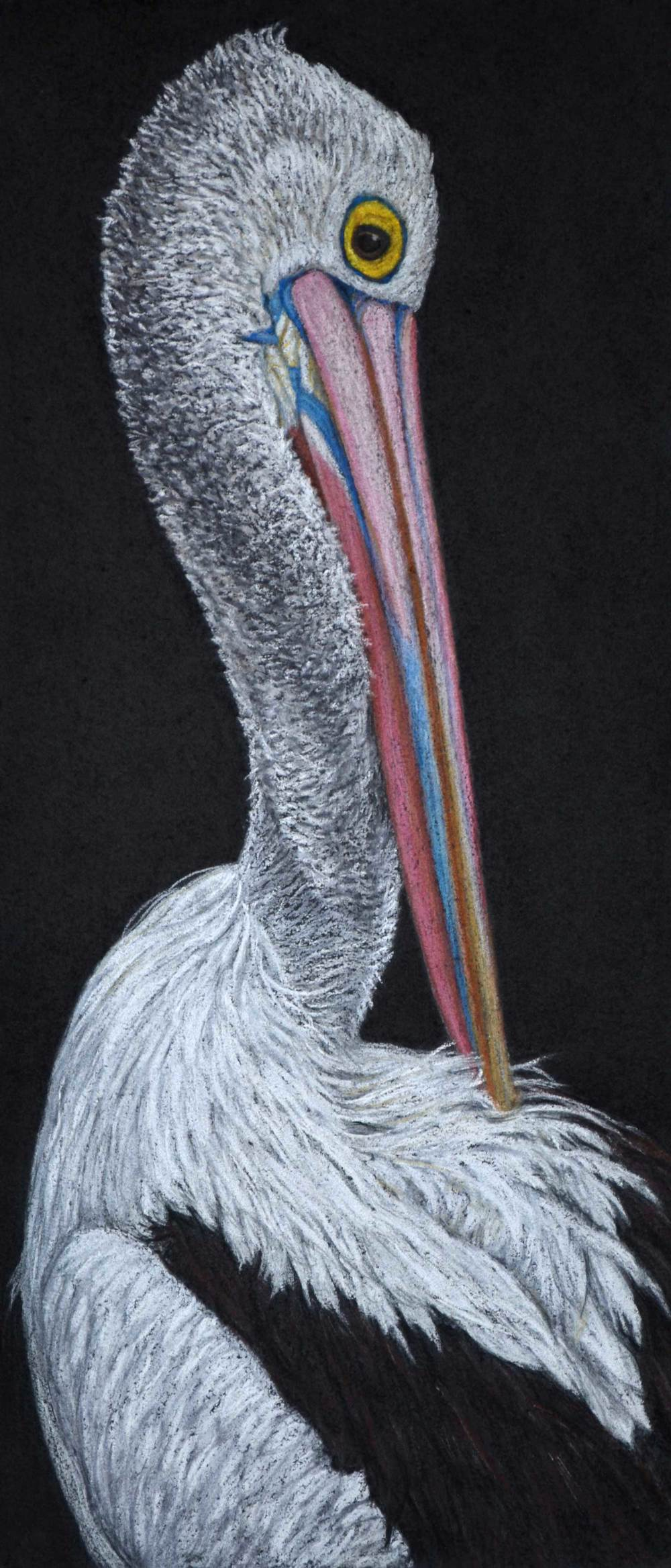 pelican-drawing-rachel-newling_edited-1.jpg