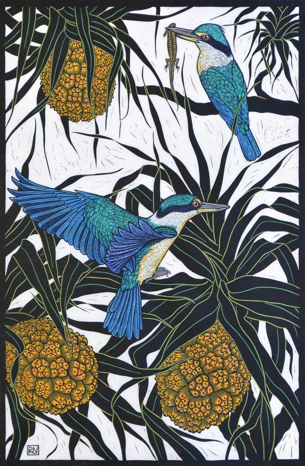 SACRED KINGFISHER  75 X 50 CM    EDITION OF 50  HAND COLOURED LINOCUT ON HANDMADE JAPANESE PAPER  $1,550