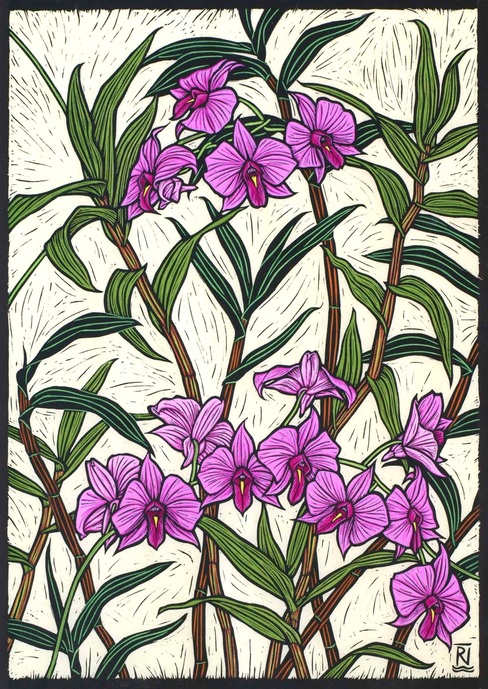 COOKTOWN ORCHID  47.5 X 33.5 CM    EDITION OF 50  HAND COLOURED LINOCUT ON HANDMADE JAPANESE PAPER  $1,050