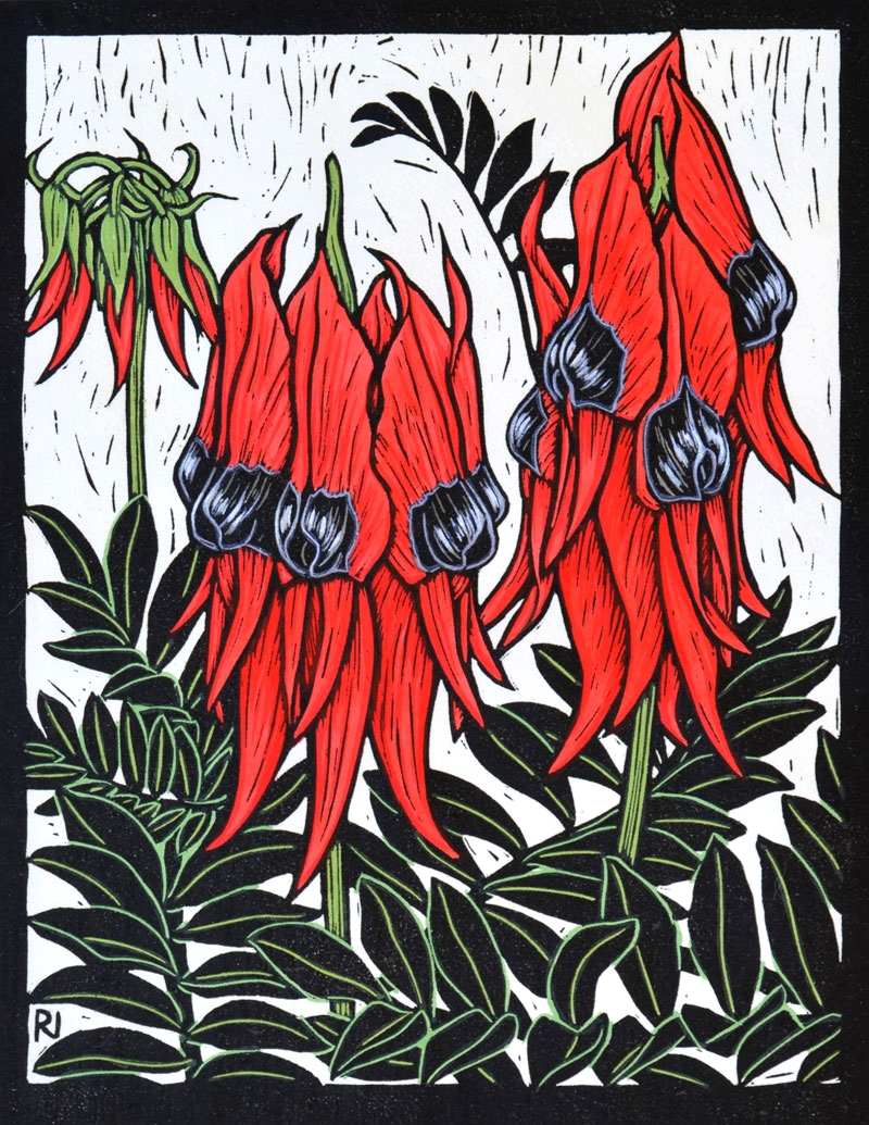 STURT'S DESERT PEA  29 X 22.5 CM    EDITION OF 50  HAND COLOURED LINOCUT ON HANDMADE JAPANESE PAPER  $600
