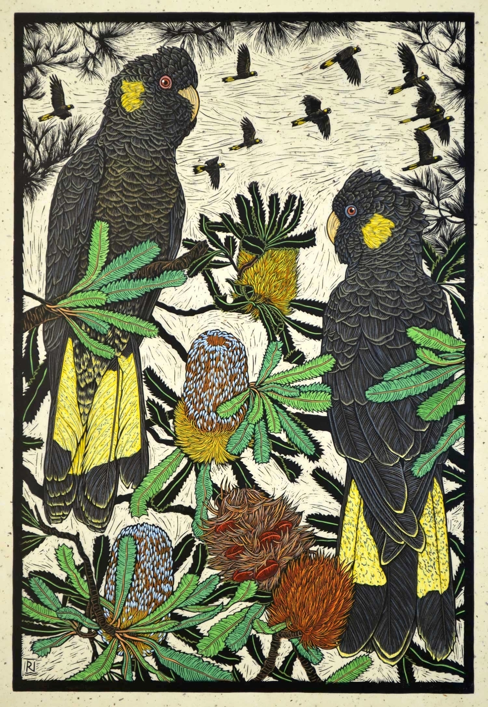 Yellow-tailed black Cockatoo & Banksia  75.5 x 50.5 cm   Edition of 50  Hand coloured linocut on handmade Japanese paper   $1,700
