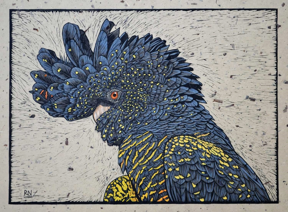 RED-TAILED BLACK COCKATOO PORTRAIT 37 X 50 CM    EDITION OF 50 HAND COLOURED LINOCUT ON HANDMADE JAPANESE PAPER $1,000